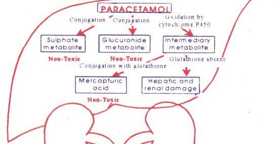 acetaminofen pierderea în greutate câți kj pentru a arde 1kg grăsime