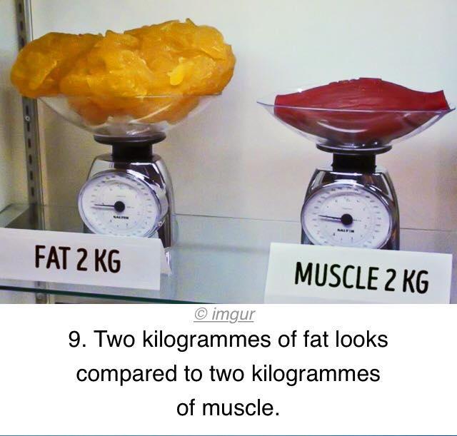 Cum se calculează rata metabolică bazală și consumul zilnic de energie? - GymBeam Blog