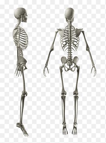 figura subțire a corpului
