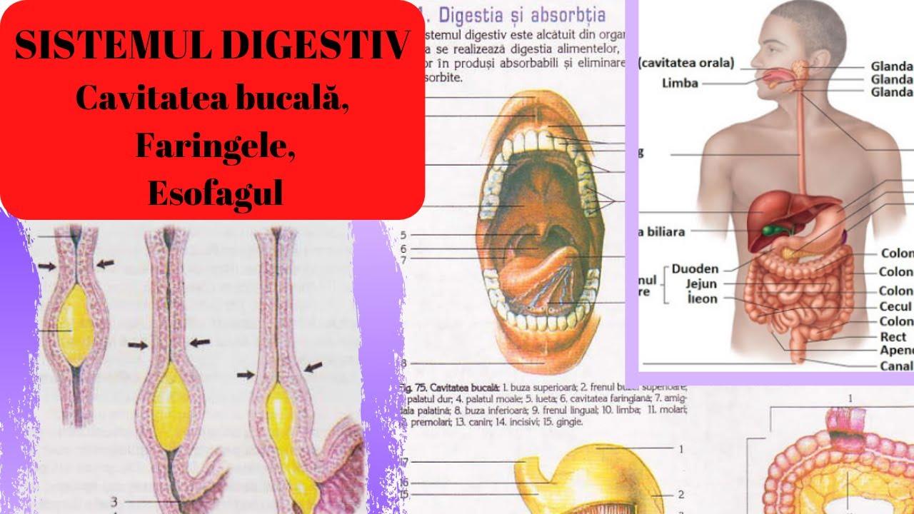 slăbire cavitate adalah rezultatele pierderii în greutate yokebe
