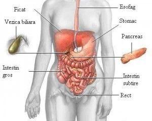 pierde grăsime în pancreas pierderea în greutate de ceai hibiscus