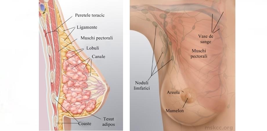 Pierderea în greutate a inversării mamelonului. Cele mai comune simptome in cancerul de san