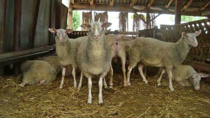 oile pierde în greutate