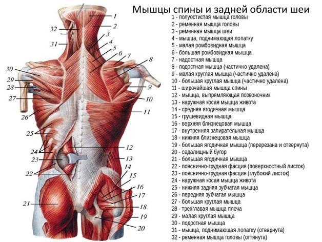 Antrenamente de culturism: Exerciții pentru dorsal - Victor Diaconescu