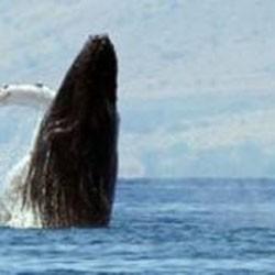 economisiți greutatea balenelor pierd arzatoare de grasimi d5