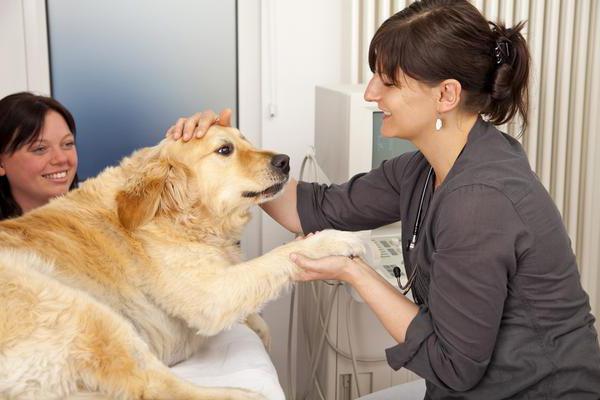 ce cauzează pierderea în greutate a puppies