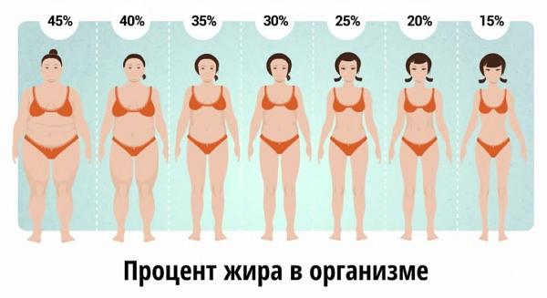rata normală de pierdere de grăsime corporală